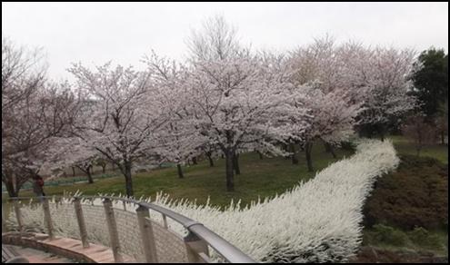 20120410 大府・東浦 健康の森2 kjsネット通販.JPG